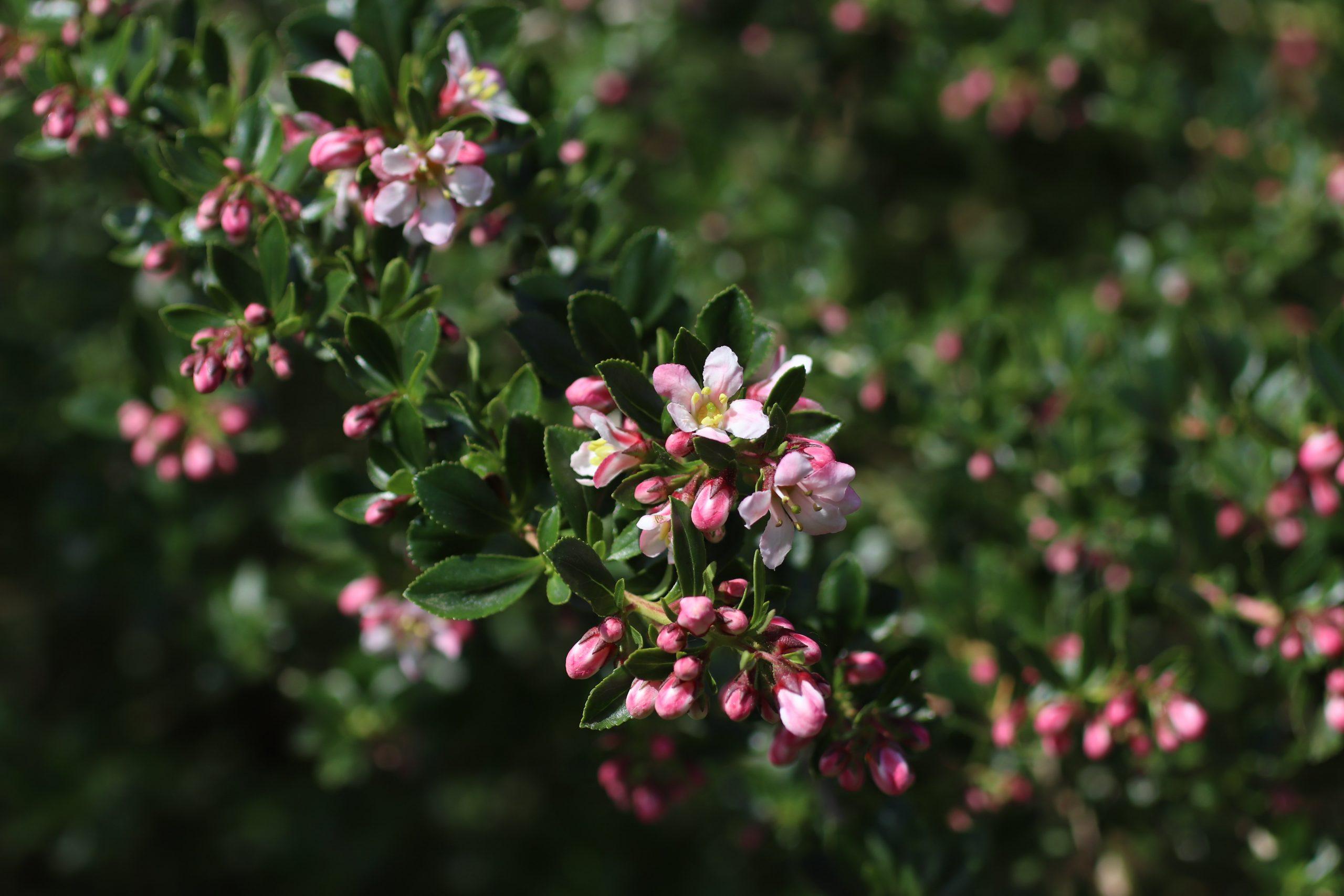 how to maintain flower garden