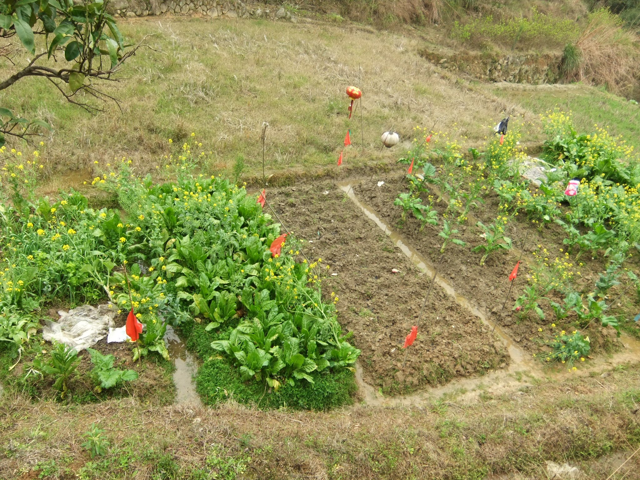 home garden with vegetables