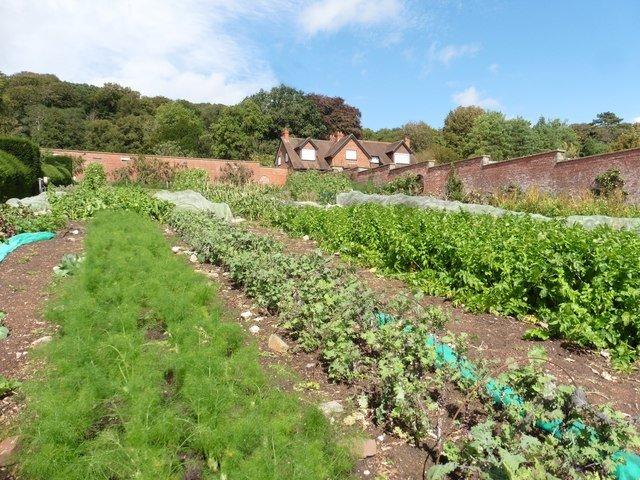 soil for vegetables
