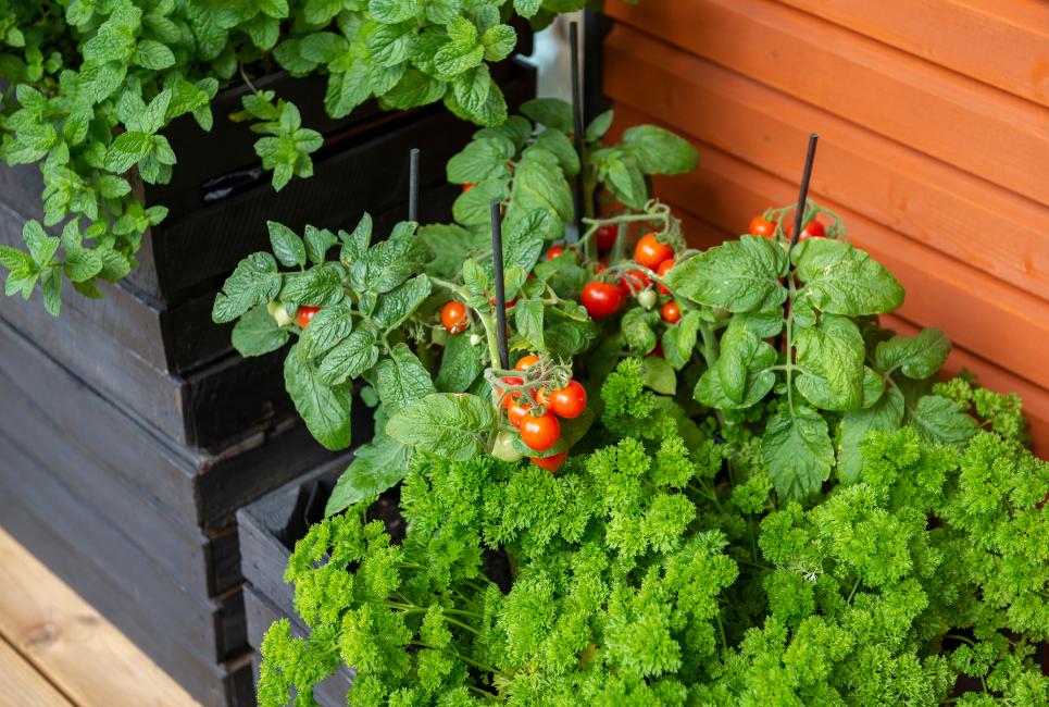 Best Tomato Planters