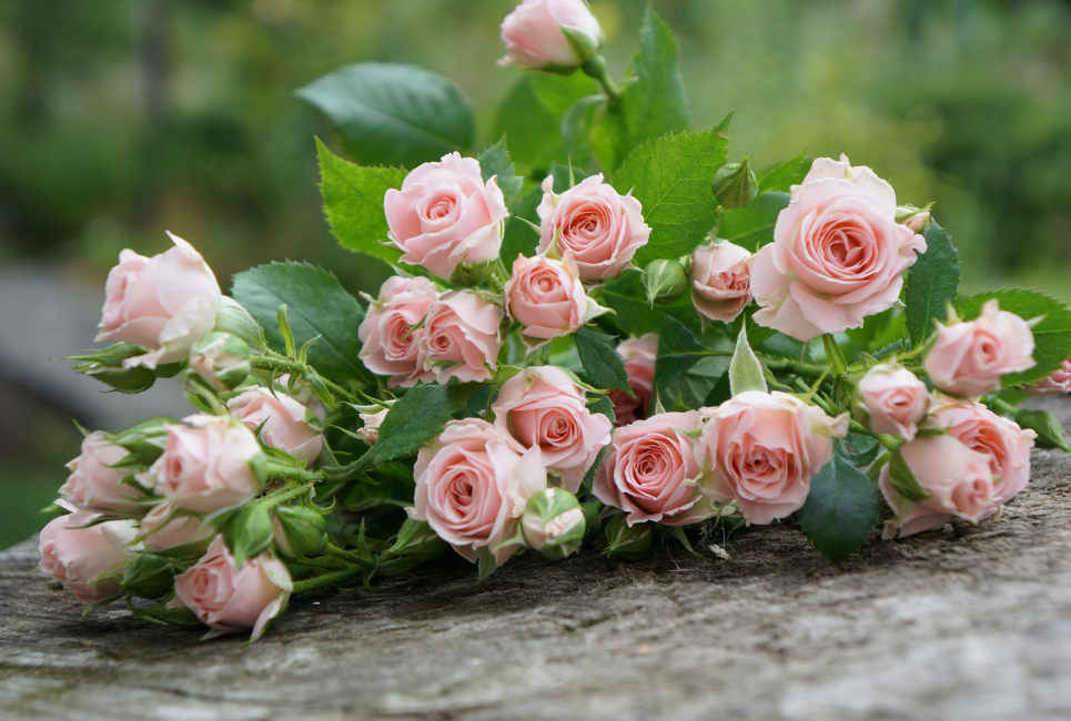 Types and Varieties of Roses