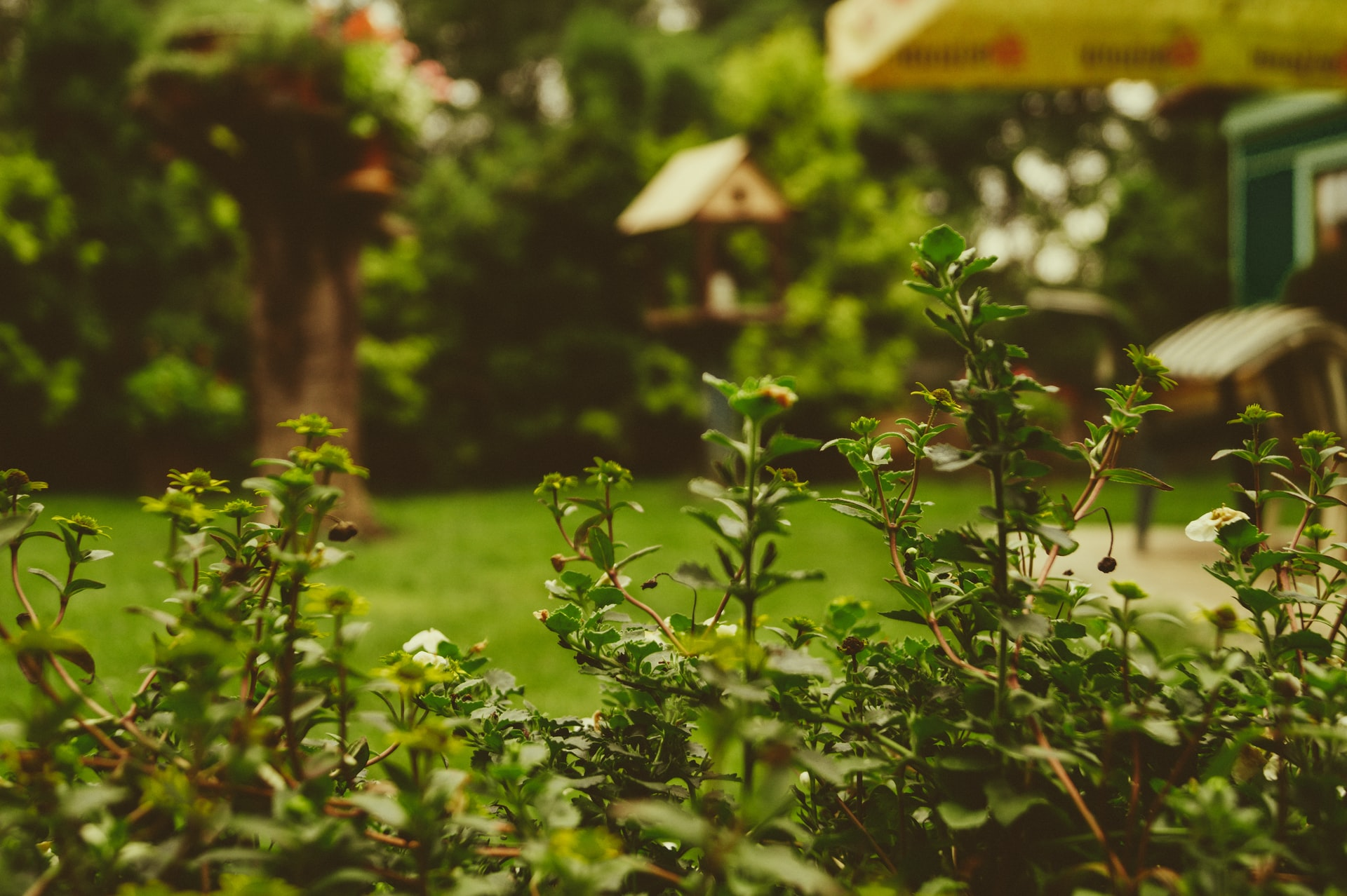 Planting Zones Explained