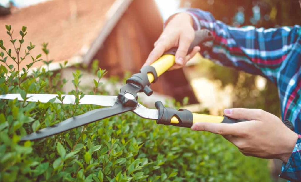 Best Garden Scissors Guide