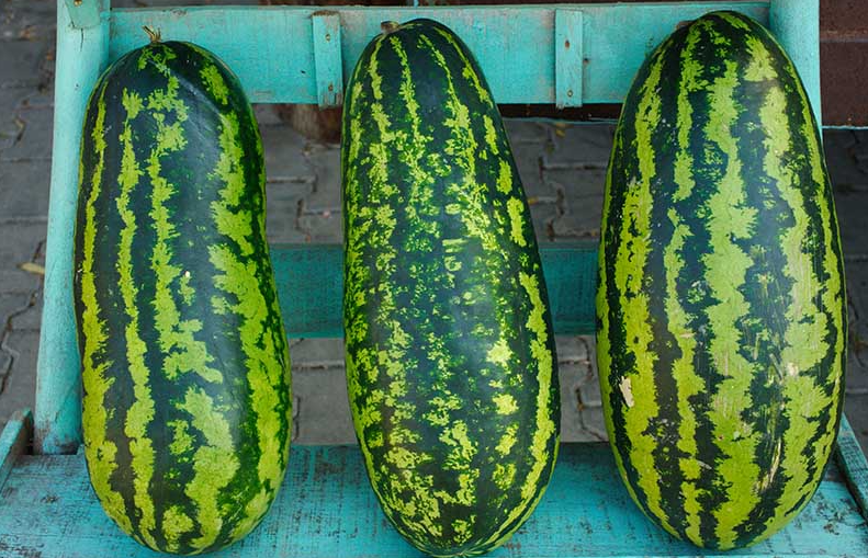 Jubilee Watermelon Seeds